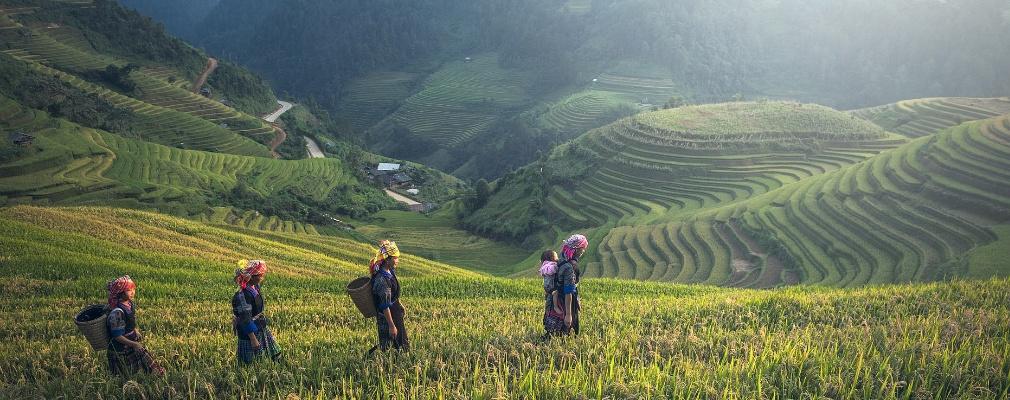 Landbouw Cambodja
