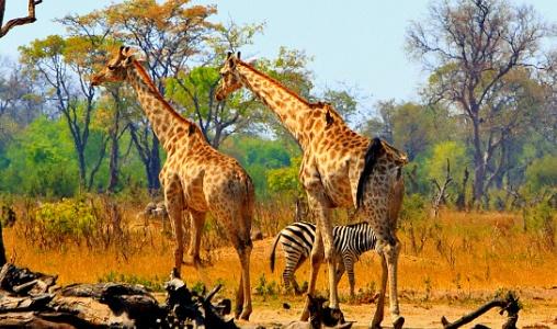 Visum Zimbabwe